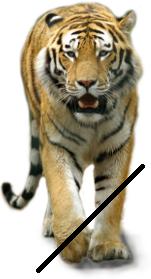 Tiger Cornelius